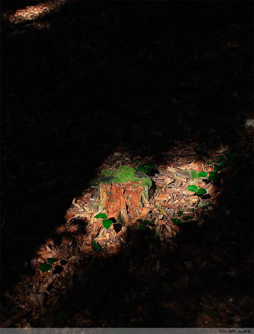 Ostrovy světla