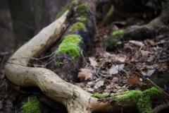 Lesem se plazí had